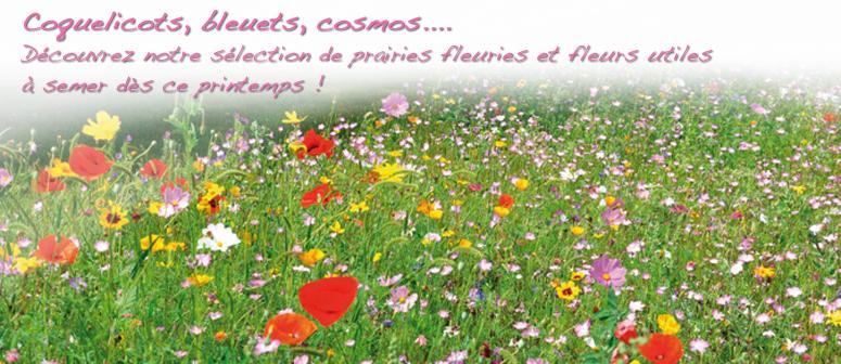 Le Mur Végétal : kits de haies, plantes de jardin ...