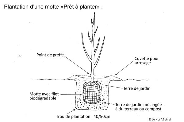 Schéma d'une motte prête à planter