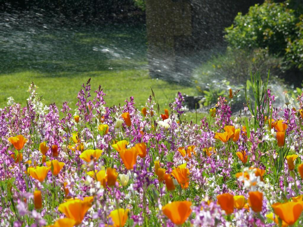 Prairie fleurie m lange court durable sur le mur v g tal for Catalogue de fleurs vivaces