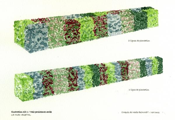 kits de haies et massifs haies taill es persistantes sur le mur v g tal. Black Bedroom Furniture Sets. Home Design Ideas