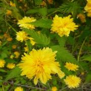 A floraison printanière