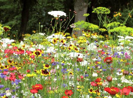 Prairie fleurie Les amis du jardin, Nova flore