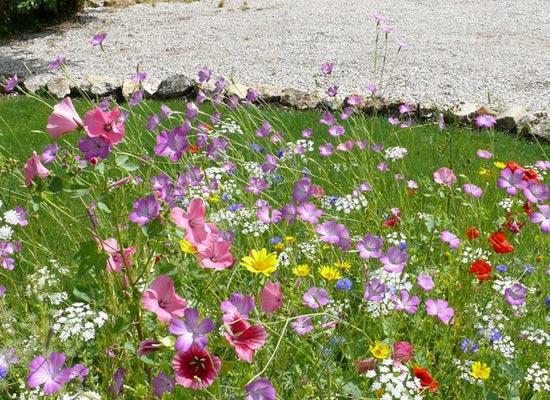 Prairie fleurie pour zone spécifique